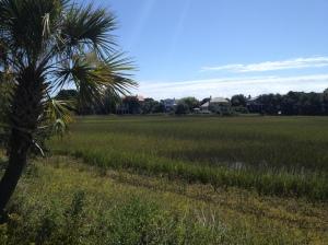 seagrass ln