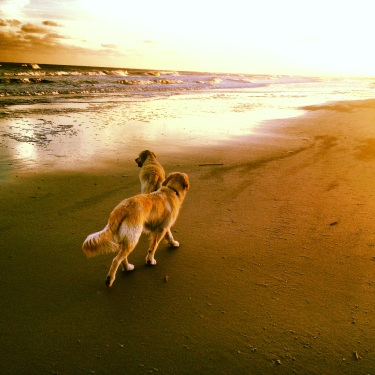 Dogs on Sullivan's Island Beach